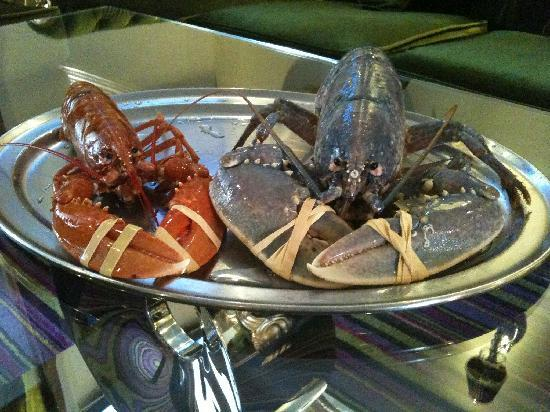 Talbot Hotel: Rare Blue Lobster in our lobster tank!