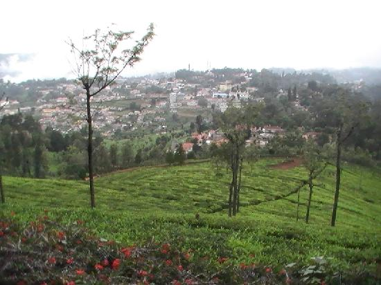 Tranquilitea Farm Stay: The lovely view
