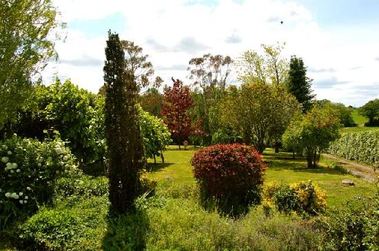Maybella Bed & Breakfast : view of the garden