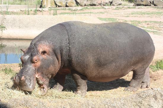 Parc Zoologique de Frejus : j ai faim