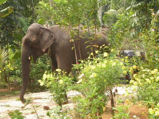 Varkala, India: garden 1