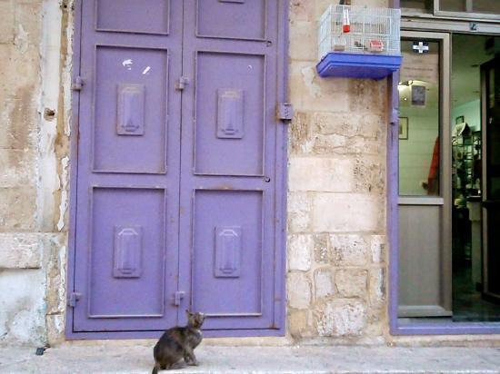 Old City of Jerusalem: all kitty in the old city