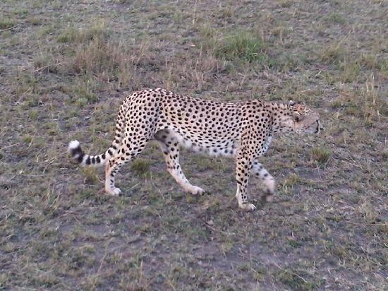 Entim Camp: Cheetah