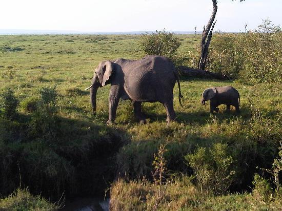 Entim Camp: Elephants