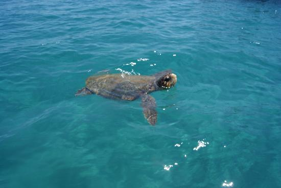 Venus Hotel & Suites: Our Turtle