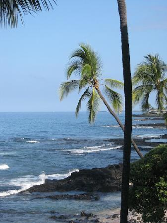 Kona Banyan Tree: Another view from the lanai.