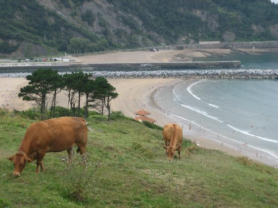 Landarte: Kühe über Deba