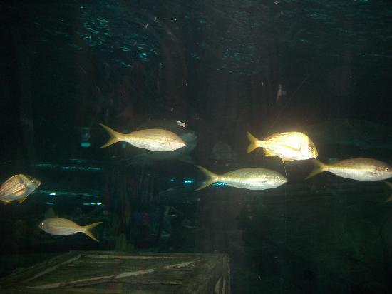 Myrtle Beach Aquarium Picture Of Ripley S Aquarium