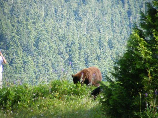Fairmont Chateau Whistler Golf Club: Bears on the tee deck!