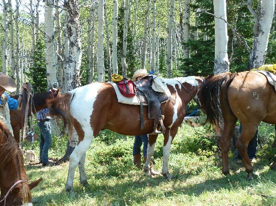 Paradise Guest Ranch: tying up for lunch on the all day ride