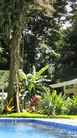 VIP Hotel Playa Negra: Imagen de la piscina