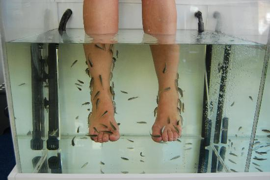 Doctor fish picture of doctor fish foot spa for Fish spa near me