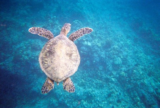 seafire snorkel adventures