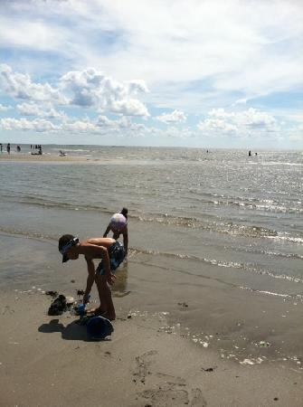 Old Saybrook, CT: Playing on the sandbar.