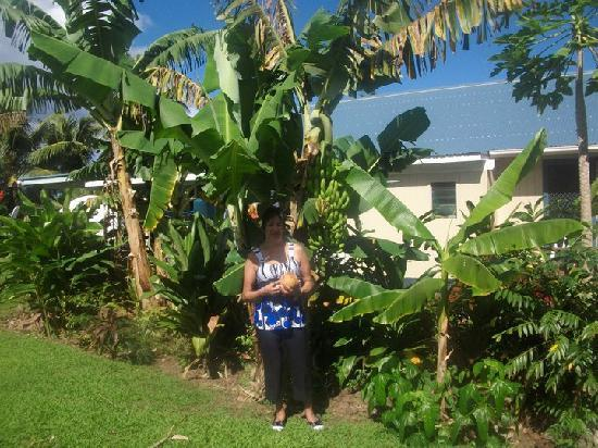Te Akapuao Holiday Home and Studio Villas: Banana trees behind the house