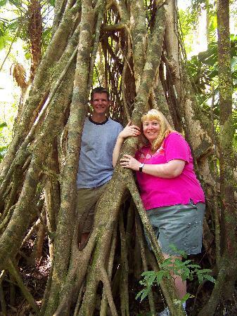 Heritage & Interpretive Tours: Strangler fig