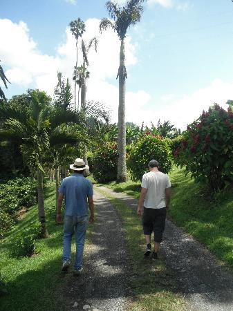 Manizales, Colombia: Tour through the coffee farm