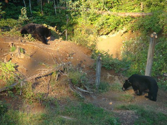 Domaine de nos Ancetres : chouette des ours !!!