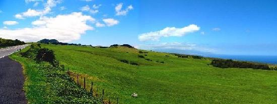 Maikai Ohana Tours: コハラからの眺め