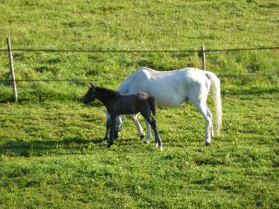 Biohotel Stanglwirt: Pferdegestüt