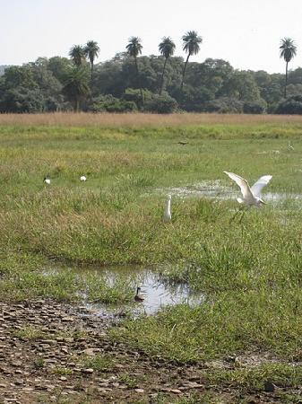 Vinayak Guest House: Bird sanctuary