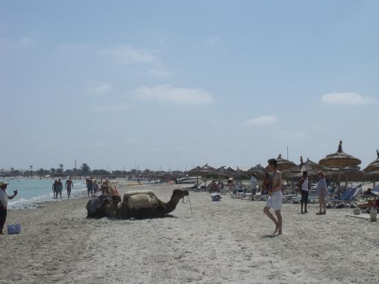 Yadis Djerba Golf Thalasso & Spa : la plage