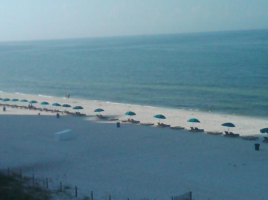 Osprey on the Gulf : Beach early a.m.