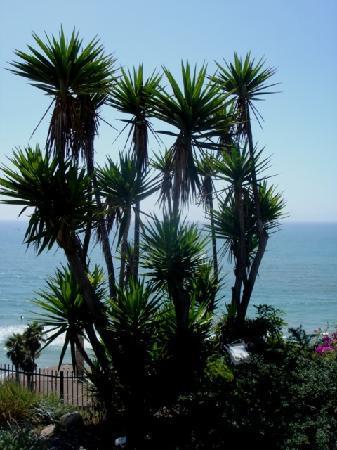 San Clemente, CA: Ocen view
