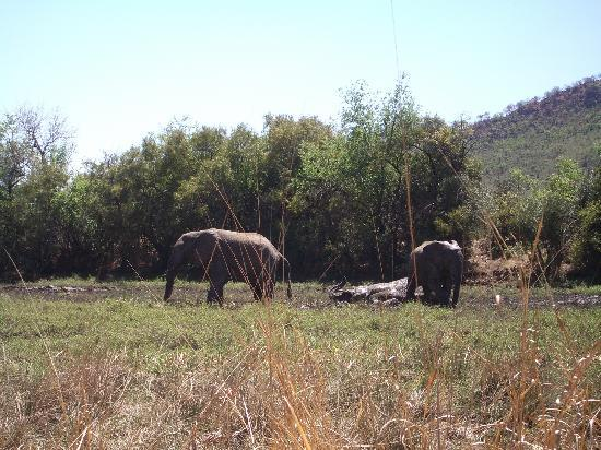Golden Leopard Resort - Manyane: Game spotting!