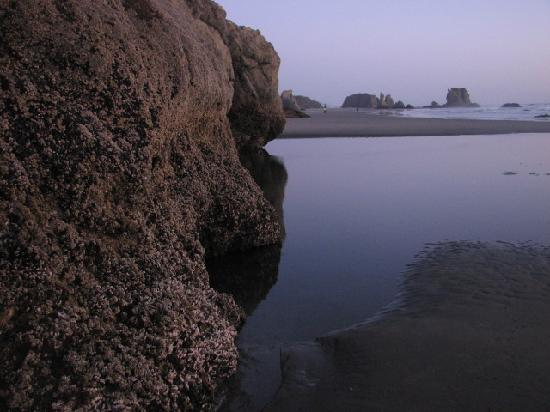 Sunset Oceanfront Lodging: Low tide