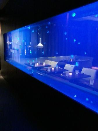 Jelly Fish Tank Picture Of Steak 954 Fort Lauderdale