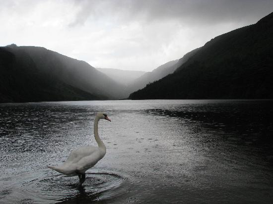 Vale of Glendalough, Irlanda: By the upper lake...