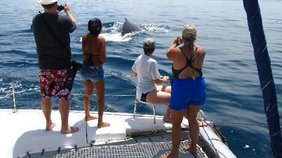 Whale Watching Panama: heading out.