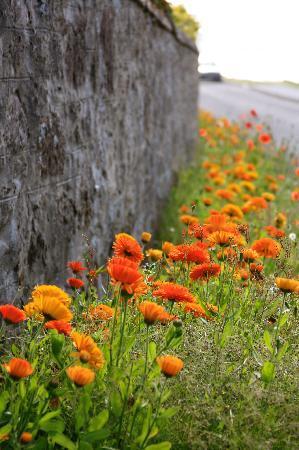 Nairn Beach : Flowers along sea wall