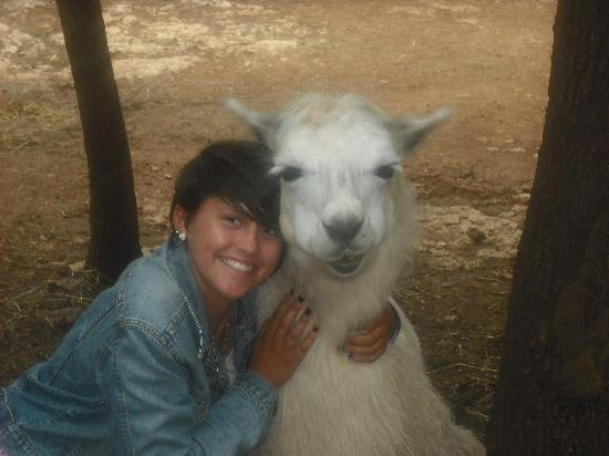 Ardeche Lamas : It's so fluffy!