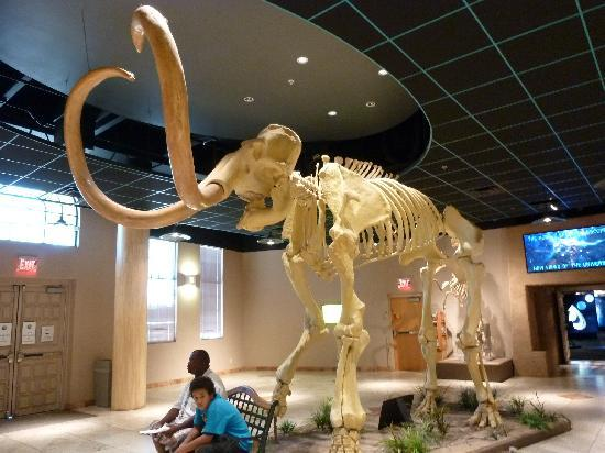 fools gold - Picture of Arizona Museum of Natural History, Mesa ...