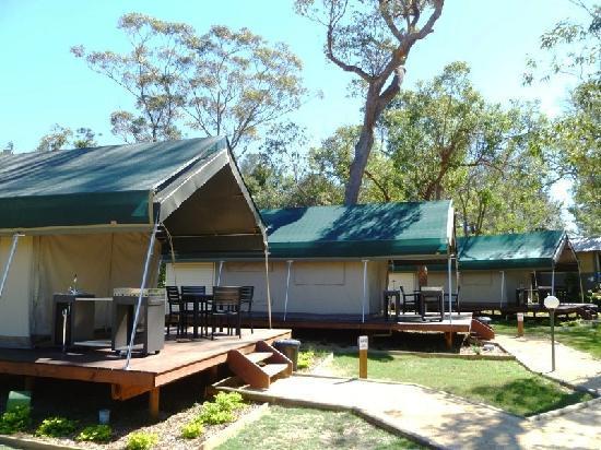 NRMA Ocean Beach Holiday Park: Safari Palm Treehouse