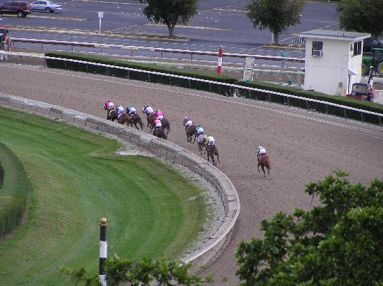 Stadium Hotel: Calder Horse Races taken from room balcony