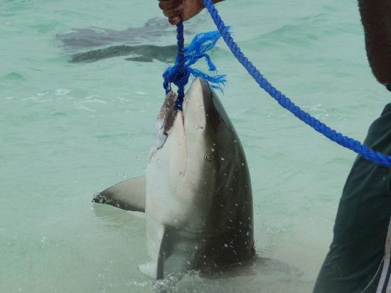 Powerboat Adventures: Shark wrangling