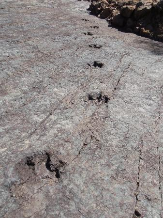 Dinosaur Tracks (Cal Orck'o): Footprints