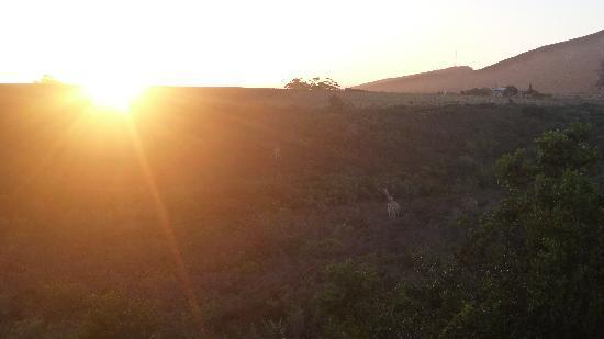Garden Route Game Lodge: Sonnenaufgang auf der Terrasse vom Restaurant vor Game Drive