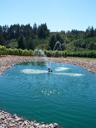 Ardiri Winery and Vineyards : Fountain/Pond
