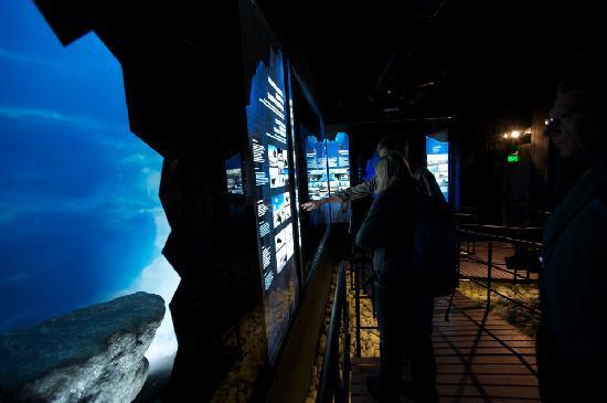 Glaciarium: Dioramas