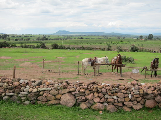 Mision La Muralla: horseback riding is available