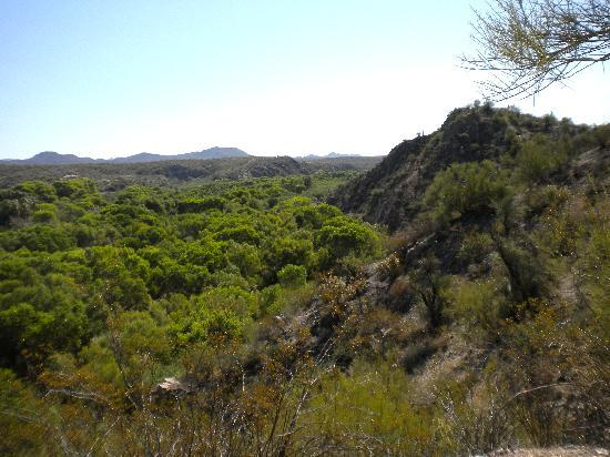 Hassayampa River Preserve: looking back across the riparian area of the Hassayampa River towards Wickenburg