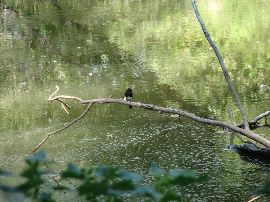 Hassayampa River Preserve: a bird we DID see