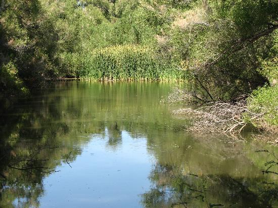 Wickenburg, AZ: the big pond at the Hassayampa River Preserve