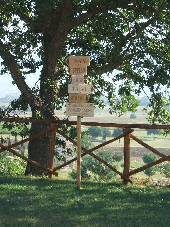 Agriturismo i Mille Ulivi : panorama