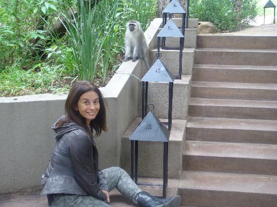 Londolozi Private Game Reserve : camino al lobby