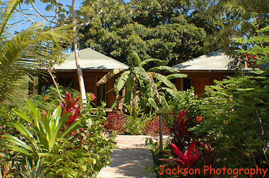 Hotel Chillies: Garden towards the 2 bedroom cabins